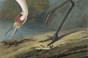 Success Story: The Whooping Crane