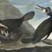JJA's Trio of Cormorant Species: From Florida to Labrador