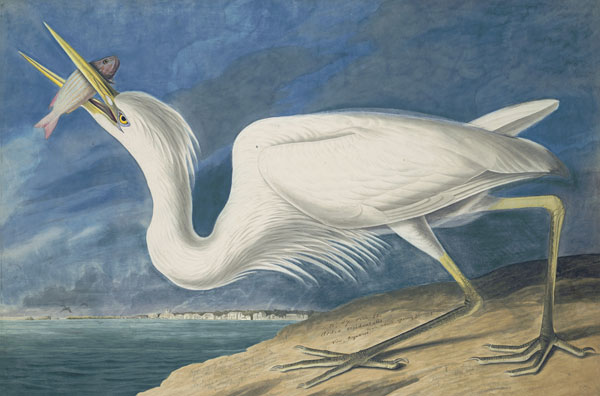 John James Audubon (1785-1851) <i>Great Blue Heron (</i>Ardea herodias<i>), Study for Havell  pl. 211</i>, 1821; 1834