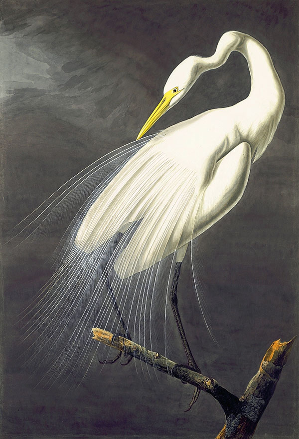 Figure 1. John James Audubon (1785–1851)<br /><em>Great Egret (</em>Ardea alba<em>), </em>1821<br />Watercolor, graphite, pastel, gouache, white lead pigment, black ink, and black chalk with selective glazing on paper, laid on card, 37 7/16 x 25 9/16 in. (95.1 x 64.9 cm)<br />Purchased for the Society by public subscription from Mrs. John J. Audubon, 1863.18.30